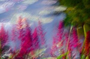 """The Garden of Monet""  © Sharon Brown Christopher"