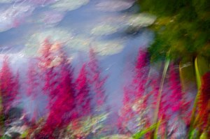 """The Garden of Monet""  © Sharon Brown Christopher"