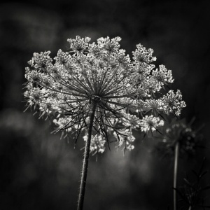 Meadow--2