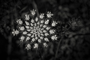 Meadow-