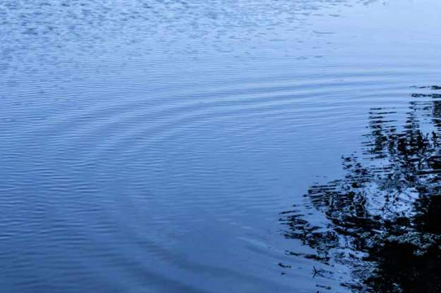 ripples-web