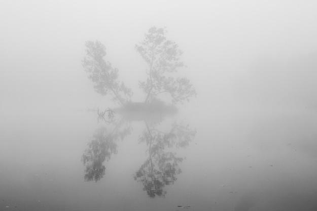 fog-9764