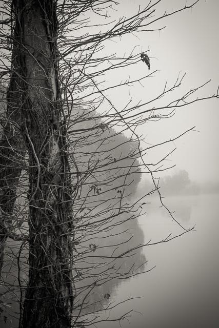 fog-9864