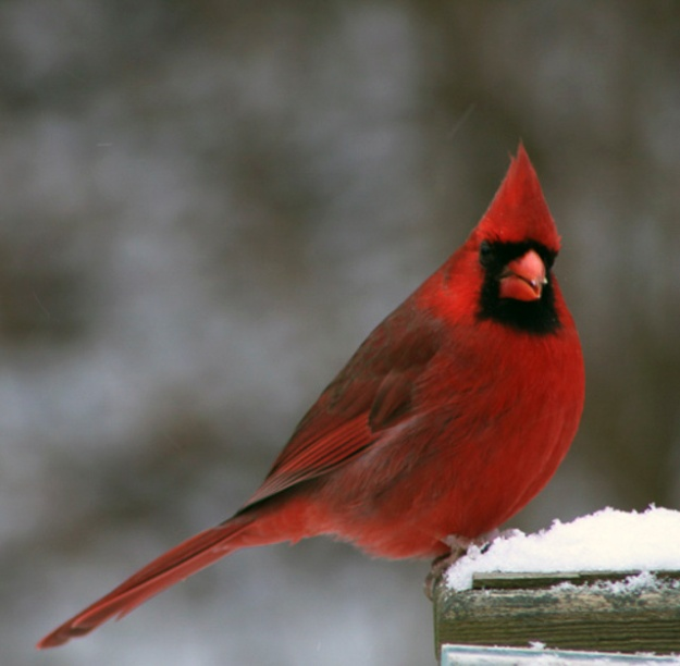 winterbirds-02