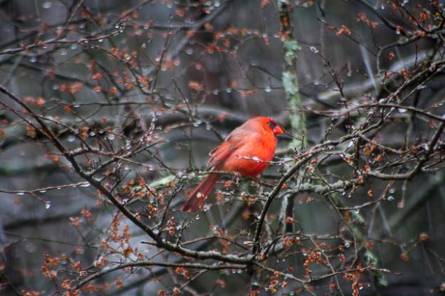 winterbirds-0826