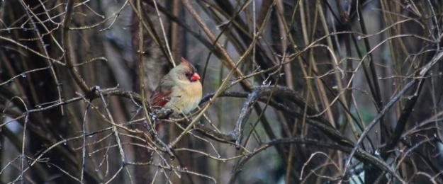 winterbirds-0839