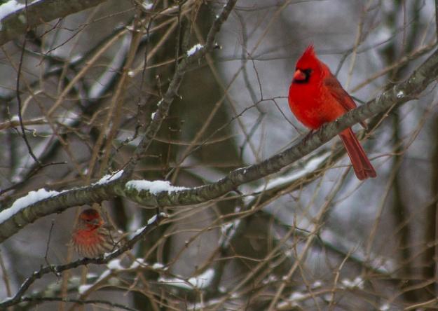 winterbirds-9851