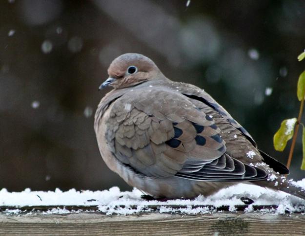 winterbirds-