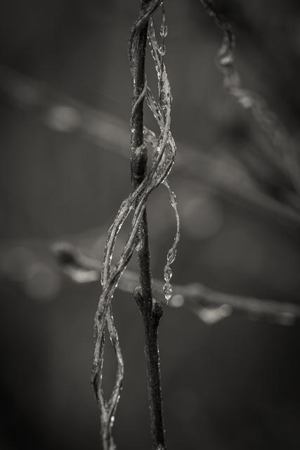 IceStorm-2590