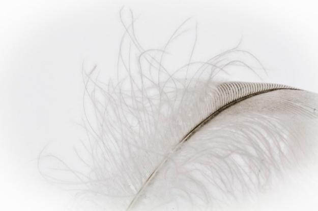 whiteonwhite-9744