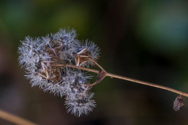 Autumn-9205