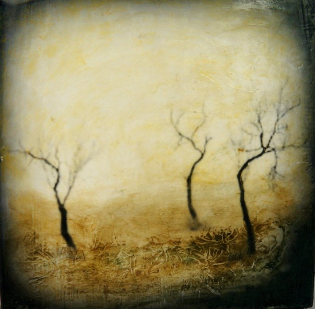 """Dancing Trees"" © Amanda Smith"
