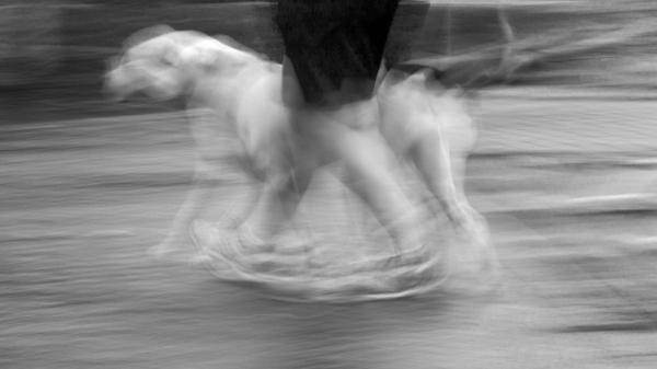 © Sue Henry
