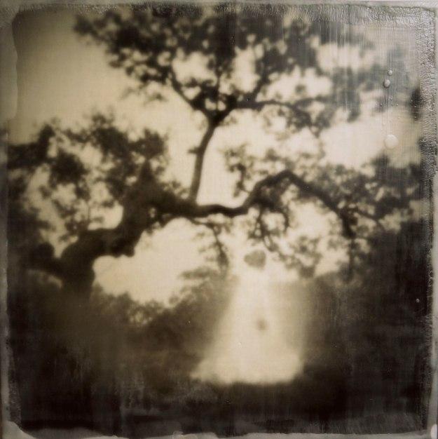 """""""Waiting"""" © Amanda Smith"""