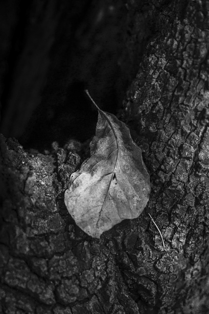 back woods-9115