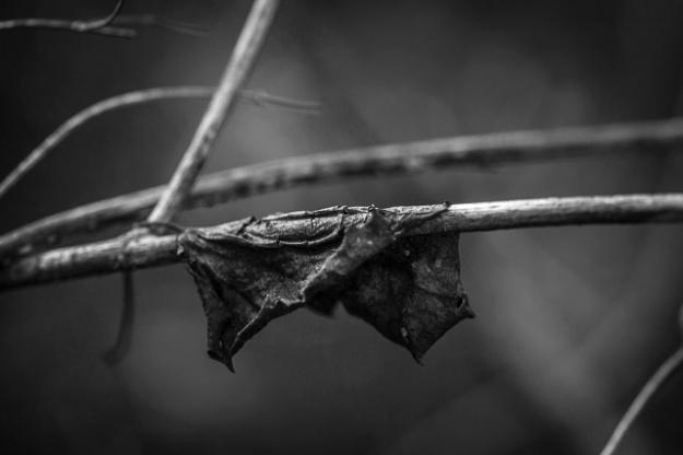 back woods-9164