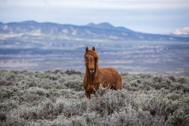 Wild Horses-0299