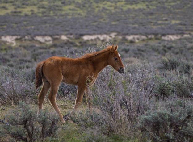 Wild Horses-0587