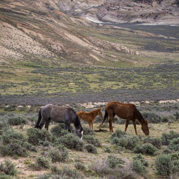 Wild Horses-0608