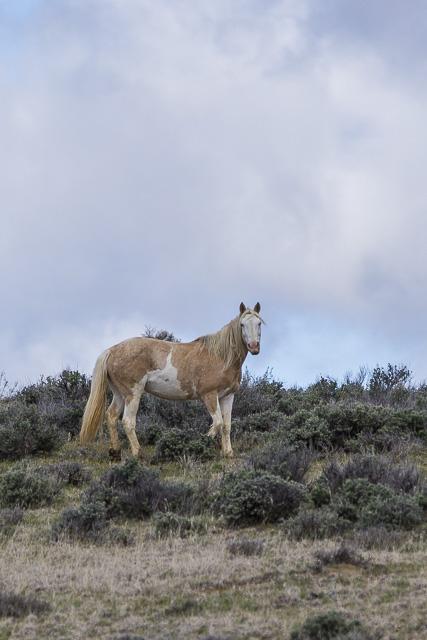 Wild Horses-0632