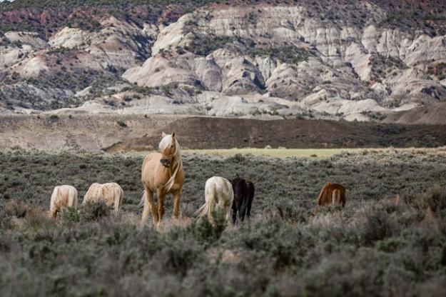 Wild Horses-0712