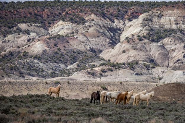 Wild Horses-0769