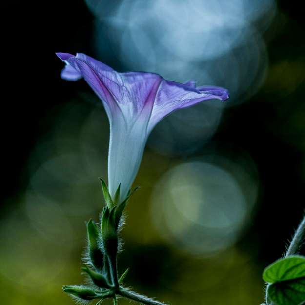 lastflowers-2883