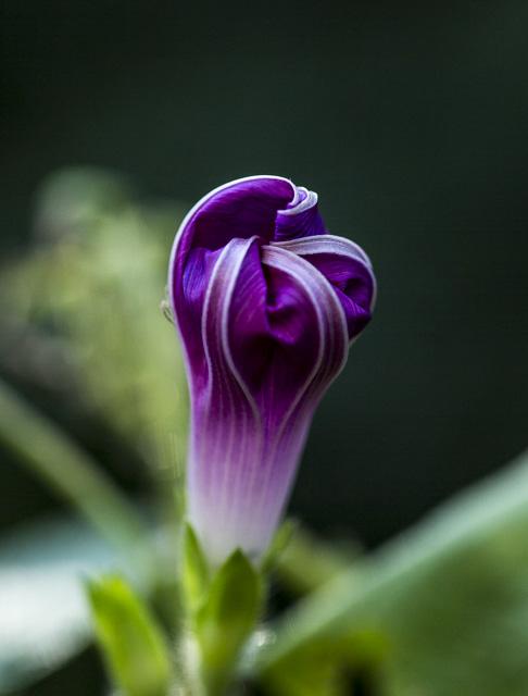 lastflowers-3029