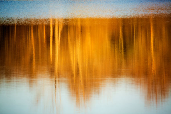 nature-abstracted-blue-and-gold