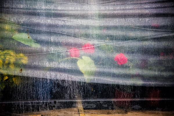 the-greenhouse-in-the-rain