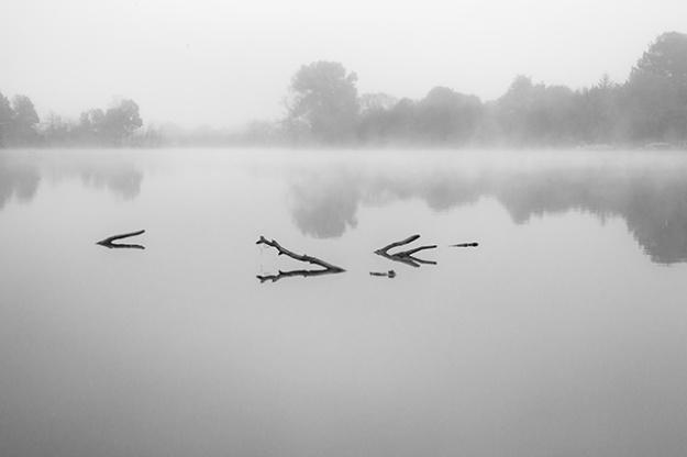 Foggy morning-Burr